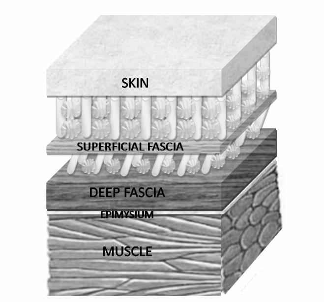 Fascia_Structurebw