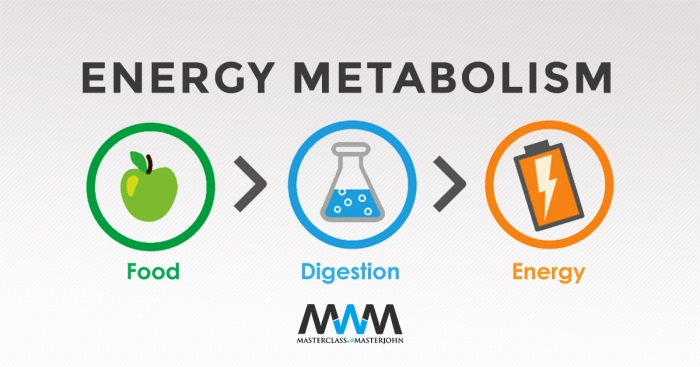TW-WEB-Energy-Metabolism